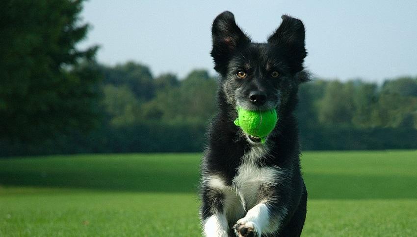 addestramento-cane_O1