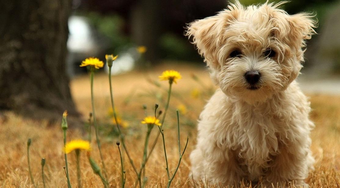 cane-sul-prato-154070