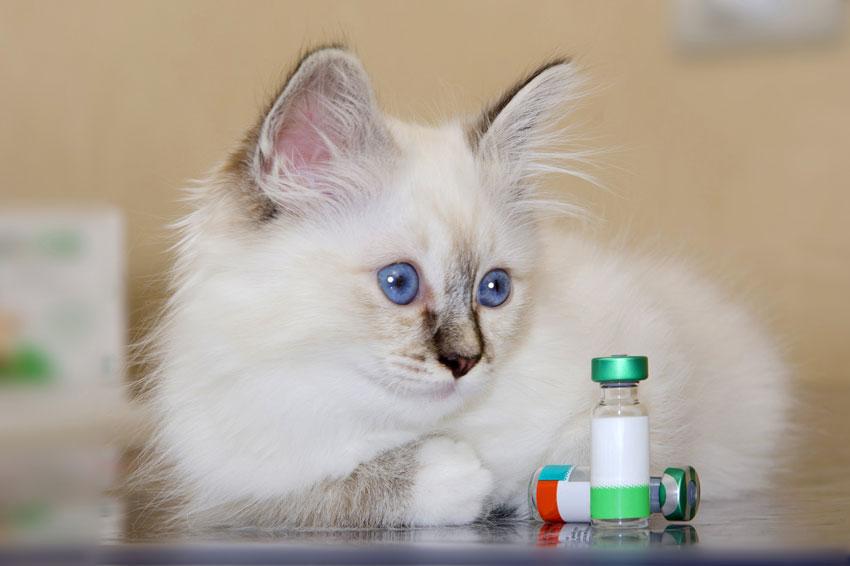 vaccinazione-nel-gattino